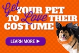 How To Get Your Dog to Love Their Halloween Costume