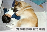 How To Maintain Your Pet�s Joints