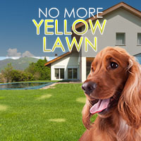 How To Prevent Dog Urine From Yellowing Your Lawn