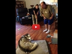 Husky Steals Potato Skins Off Dad's Plate and Get's Into Epic Dog-Man Argument!