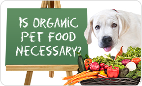 Is Organic Pet Food Necessary for your Dog & Cat?