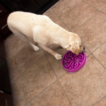 Kyjen Dog Games Slo-Bowl Slow Feeder Flower - Purple