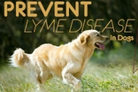 How to Prevent Lyme Disease in Dog