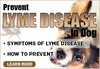 Lyme Disease in Dogs | Lyme Disease Dogs | Prevent Lyme Disease in Dog