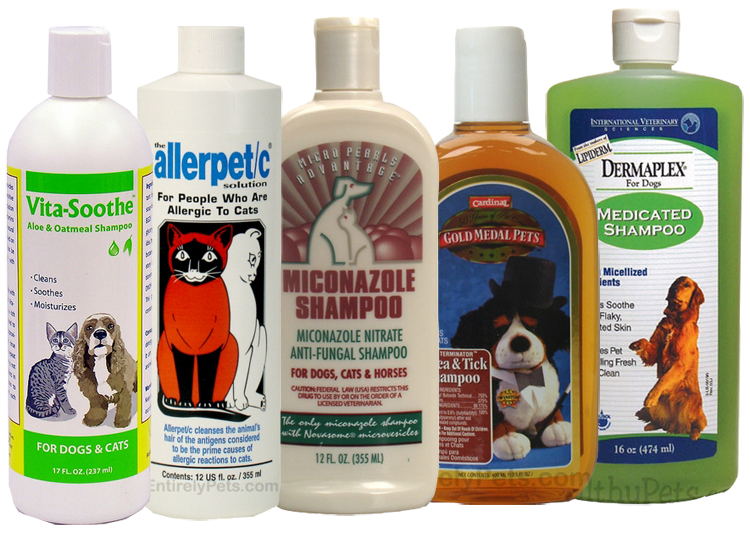 Medicated Shampoos for Dogs
