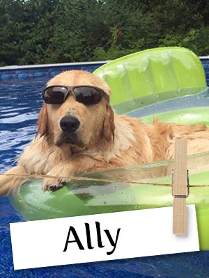 Meet Ally, The Beautiful and Loving Golden Retriever