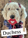Meet Duchess: A Gentle Komondor Who Was Rescued From a Barn