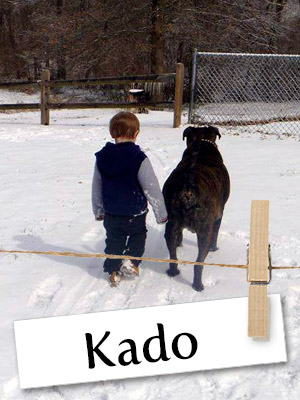 Meet Kado, This 154 Pound Gentle Giant From Tennessee!