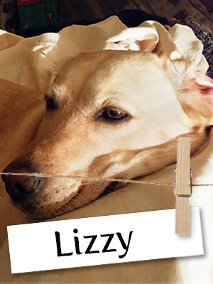 Meet Lizzy: An Amazing Service Dog Who Loves Adventure