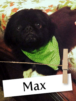 Meet Max, The Little Dog With A Loveable Personality