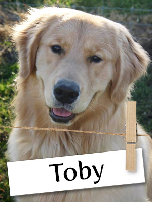 Meet Toby, the White Pine Rambler of the Double-M Tree Farm!