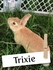 Meet Trixie, the Rabbit with a Canine Guardian