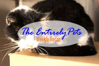 Miracles, Innovations and Puppies: Read All About 'Em In This Week's EntirelyPets Weekly Recap