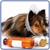 Most Common Pet Health Problems