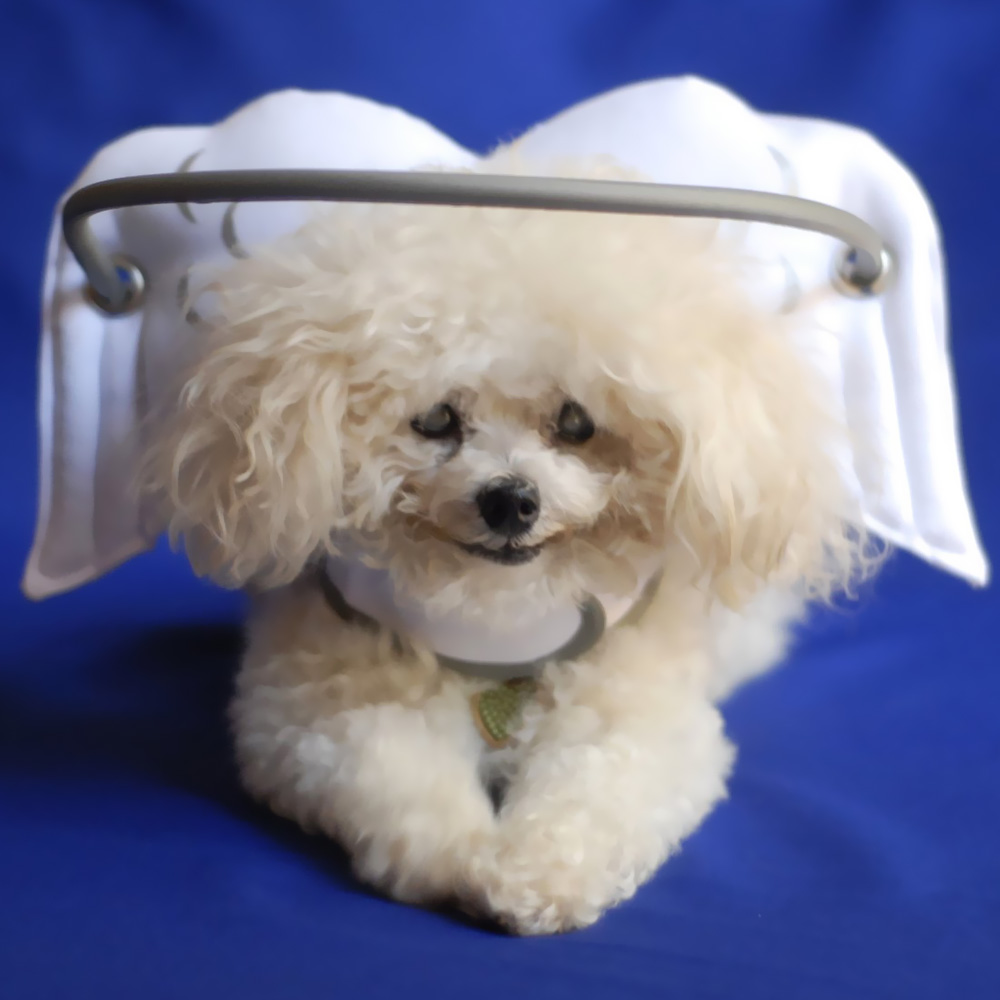 Muffin's Halo White Angel Wings - Small