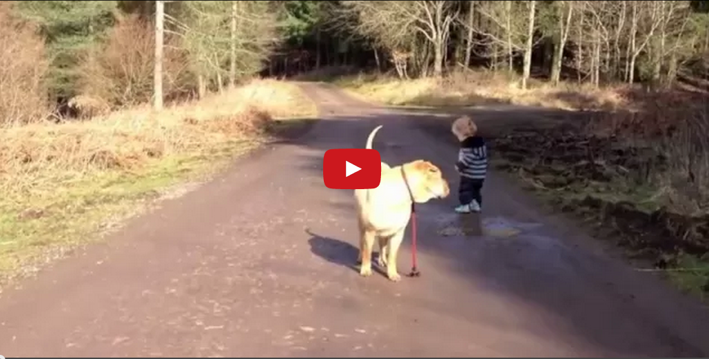 Nothing Says Friendship Like a Boy and His Dog! This Video is Too Cute!!