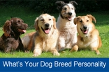Personality Quiz: What's Your Dog Breed Personality?