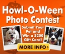 Pet Halloween Costume Contest!