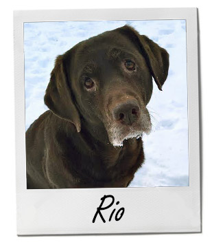Pet of the Week: Rio 1/19/2015