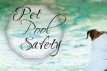 Pet Pool Safety Tips for Safe Summer Fun