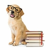 Back to School – Cat & Dog Training Supplies, Behavior Products & More