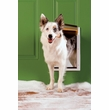 Petsafe - Extreme Weather Door, White, Med