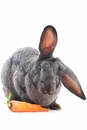 Rabbit / Bunny Nutritional Supplements