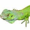 Reptile Products & Supplies