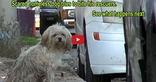 This Scared Homeless Dog's Before and After Rescue Transformation Is Incredible!