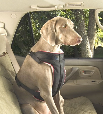 Solvit Pet Vehicle Safety Harness (X-Large)