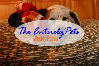 Television Actor Charged with Felony Counts of Animal Abuse, Pope Declares Dogs Go to Heaven, and Toronto Launches Mass Cat-Trapping Operation- This & More in the EntirelyPets Weekly Recap (December 6-12, 2014)