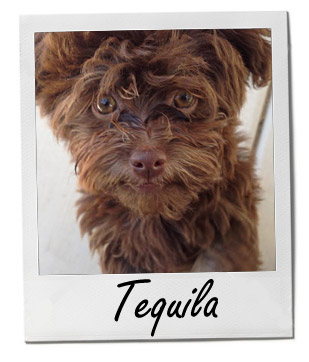 Tequila 4/15/14