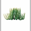 Tetra Water Wonders Aquarium Plant Hairgrass 6""
