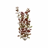 Tetra Water Wonders Aquarium Plant Red Ludwigia 12""