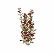 Tetra Water Wonders Aquarium Plant Red Ludwigia 18""