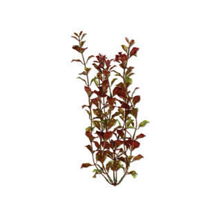 Tetra Water Wonders Aquarium Plant Red Ludwigia 24""