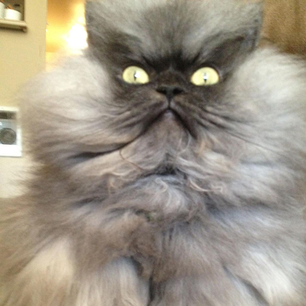 The Late Colonel Meow