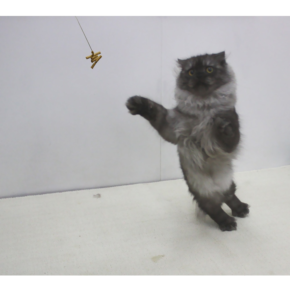 The Original Interactive Cat Toy by CatDancer