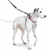 The Sporn Pull Stop Halter Leash RED