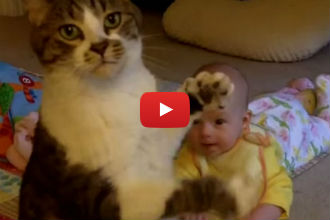 This Adorable Cat Loves His Cat-Sized Human and it's the Cutest Thing Ever!!
