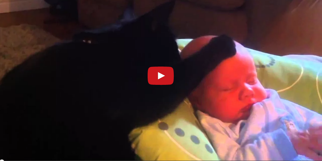 This Cat Calms a Crying Baby and It's Absolutely Amazing!!
