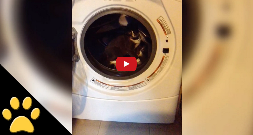 This Cat Thinks a Washing Machine Is a Treadmill and It's Extremely Adorable!!