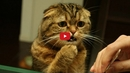 This Compilation of Confused Cats Will Make Your Day!! My Sides Hurt from Laughing!!