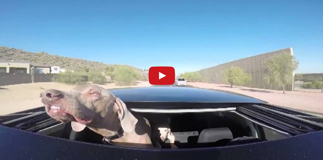 This Dog Loves Sticking His Head Out the Window- And You'll Love Watching Him Do It!