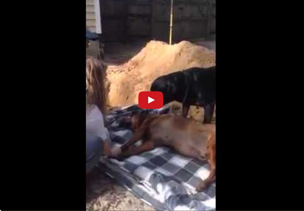 This Dog Mourning his Late Brother Will Remind You to Love Like Each Day is Your Last