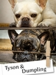 Title - Meet Tyson & Dumpling: Adorable Rescued French Bulldogs