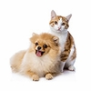 Top 15 Pet Products of 2015