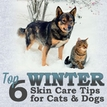 Top 6 Winter Pet Skin Care Tips