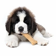 Top Selling Products on EntirelyPets