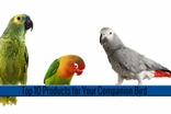 Top 10 Products for Your Companion Bird